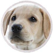 Labrador Puppy Round Beach Towel