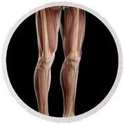 Leg Musculature Round Beach Towel