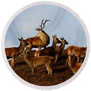 Red Deer In The Highlands Round Beach Towel