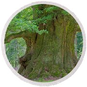 800 Years Old Oak Tree  Round Beach Towel by Heiko Koehrer-Wagner