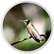 8181-001 - Ruby-throated Hummingbird Round Beach Towel