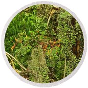 Mosses And Liverworts 8861 Round Beach Towel