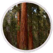 Giant Sequoia Trees Round Beach Towel