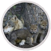 Gray Wolf And Cubs Round Beach Towel