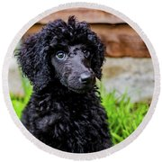 Poodle Puppy Round Beach Towel