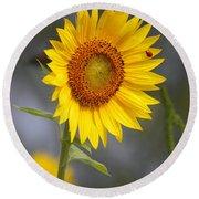 #933 D958 Best Of Friends Colby Farm Sunflowers Newbury Massachusetts Round Beach Towel