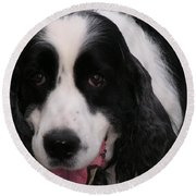 #940 D1049 Farmer Browns Springer Spaniel Round Beach Towel