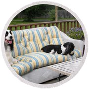 #940 D1094 Farmer Browns Springer Spaniel Together Round Beach Towel