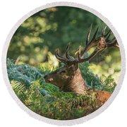 Majestic Powerful Red Deer Stag Cervus Elaphus In Forest Landsca Round Beach Towel