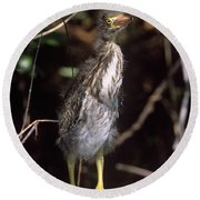 A Baby Green Heron Stretched Out Peering Into The Camera Round Beach Towel