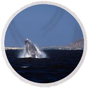 A Baby Humped Backed Whale Breeching In Banderous Bay Mexico Round Beach Towel