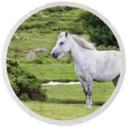 A Beautiful White Dartmoor Pony, Devon, England Round Beach Towel