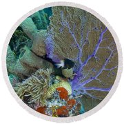 A Bi-color Damselfish Amongst The Coral Round Beach Towel