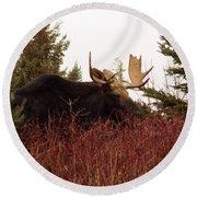 A Big Fierce-eyed Bull Moose Round Beach Towel