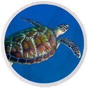 A Black Sea Turtle Off The Coast Round Beach Towel by Michael Wood