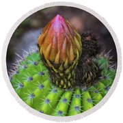A Blooming Cactus Round Beach Towel