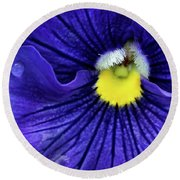 A Blue Pansy Round Beach Towel