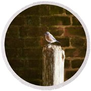 A Bluebird At The Governor's Palace Gardens Round Beach Towel