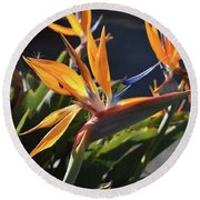 A Bunch Of Bird Of Paradise Flowers Bloomed  Round Beach Towel