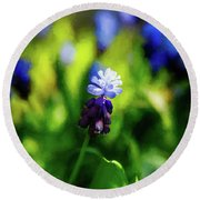 A Bunch Of Flowering Two-tone Grape Hyacinths, No.2. Round Beach Towel