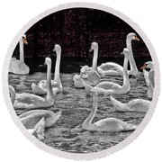 A Cacophony Of Swans Round Beach Towel