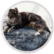 A Cat From Rome Round Beach Towel