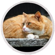 A Cat Named 'kitty' Round Beach Towel