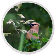 A Cedar Waxwing Facing Left Round Beach Towel