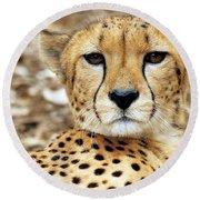 A Cheetah's Portrait Round Beach Towel