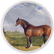 A Clydesdale Stallion Round Beach Towel by John Frederick Herring Snr