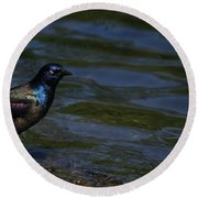 A Common Grackle Round Beach Towel
