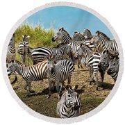 A Dazzle Of Zebras Round Beach Towel