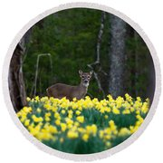 A Deer And Daffodils 4 Round Beach Towel
