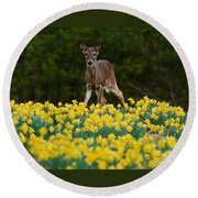 A Deer And Daffodils IIi Round Beach Towel