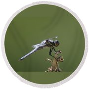 A Dragon Fly Contemplating  Round Beach Towel