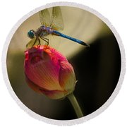 A Dragonfly Rests Momentarily On A Lotus Bud Round Beach Towel