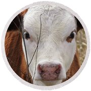 A Face You Can Love - Cow Art #609 Round Beach Towel