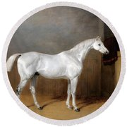 A Favourite Grey Horse Belonging To George Reed Standing In A Loose Box Round Beach Towel