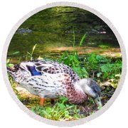 A Female Mallard Duck Is See Searching For Food 1 Round Beach Towel