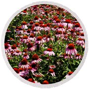 A Field Of Echinacea Round Beach Towel