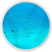 A Fish Shoal In Blue Water Round Beach Towel