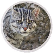 A Fishing Cat Portrait Round Beach Towel