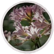 Peppermint Surprise Lily - A Floral Abstract Round Beach Towel