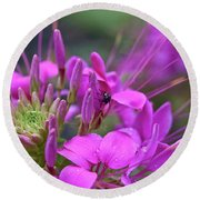 A Fly And A Flower Round Beach Towel