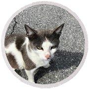 A Friendly Barn Cat Round Beach Towel
