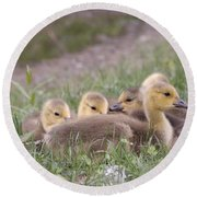 A Gaggle Of Goslings Round Beach Towel