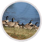 A Gathering Of Geese Round Beach Towel