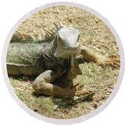 A Glaring Common Iguana On Aruba's Wild Side Round Beach Towel