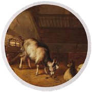 A Goat And Two Sheep In A Stable Round Beach Towel