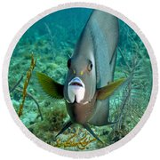 A Gray Angelfish In The Shallow Waters Round Beach Towel by Michael Wood